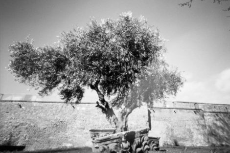 Parque del Cid, León. Fotografía estenopeica pinhole Nopo 120